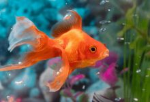 علل لکه های قرمز در ماهی آکواریومی | دام و پت