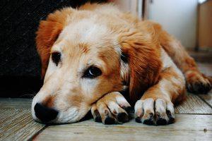 استرس در سگ ها را چگونه تشخیص دهیم؟ | دام و پت