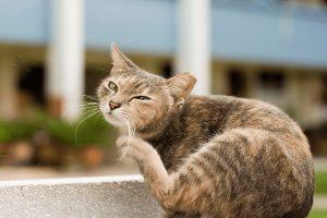 انواع انگل های گربه را بشناسید.   دام و پت