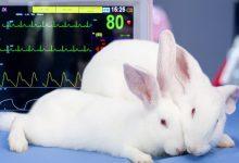 درمان حمله قلبی در خرگوش ها | دام و پت