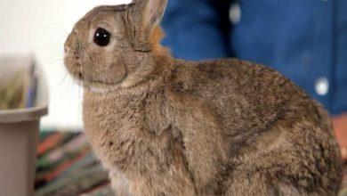 شایع ترین علل نفخ شکم در خرگوش | دام و پت