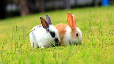 چگونه بفهمم خرگوش من گرسنه است؟ | دام و پت