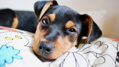 بی اشتهایی در سگ ها، علل و علائم تا راهکارهای درمان | دام وپت