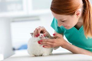 تغییر رنگ دندان خرگوش نشان دهنده چیست؟ | دام و پت
