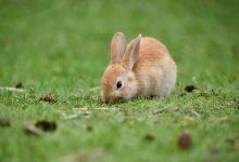 چرا خرگوش من همیشه گرسنه است؟ | دام و پت