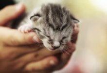 سندرم بچه گربه پژمرده | دام و پت