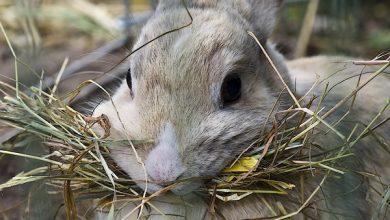 بهترین یونجه و علف برای خرگوش | دام و پت