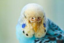 منقار پرنده، اختلالات و بیماری ها | دام و پت
