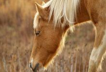 افسردگی در اسب ها، شایع ترین علل و درمان آنها | دام و پت