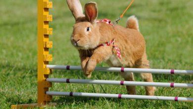 چگونه خرگوش خود را شاد و سالم نگه داریم؟ | دام و پت
