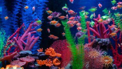 شایع ترین علل مرگ ماهیان گرمسیری | دام و پت
