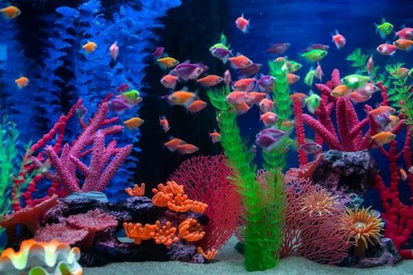 شایع ترین علل مرگ ماهیان گرمسیری   دام و پت