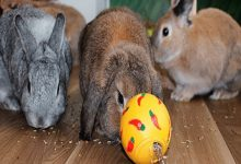 بهترین اسباب بازی برای خرگوش خانگی | دام و پت