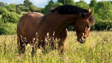 مهمترین ویتامین برای اسب کدامند؟ | پزشکت