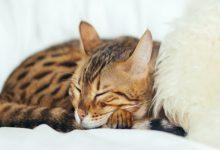 ساعت خواب گربه ها چگونه است؟ | دام و پت
