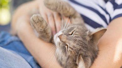 آیا گربه تان شما را دوست ندارد؟