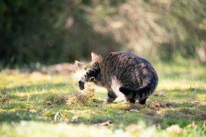 چرا گربه ها در خاک غلت می زنند؟ | دام و پت