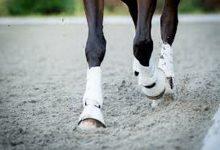 درمان لنگیدن در اسب | دام و پت