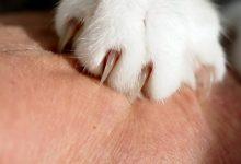 علت چنگ زدن گربه ها چیست؟ | دام و پت