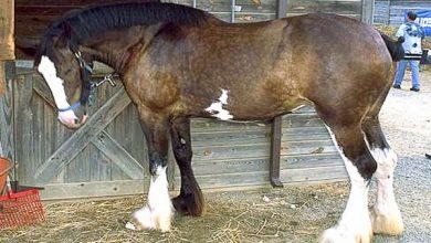 کوتاه کردن دم اسب، عوارض و مزایا   دام و پت