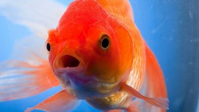 چرا ماهی من شنا نمی کند؟   دام و پت