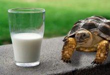 آیا لاک پشت ها می توانند شیر بنوشند؟ | دام و پت