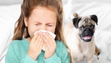 حساسیت به سگ خانگی | دام و پت