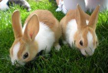 9 غذایی که می توانند خرگوش را مسموم کنند؟ | دام و پت