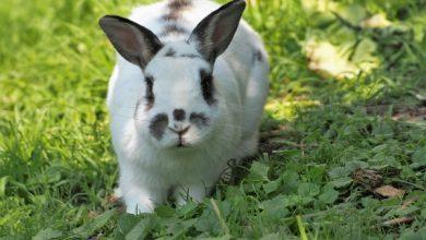 اسهال خرگوش   دام و پت