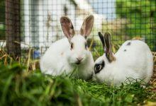 چگونه از بوی بد قفس خرگوش پیشگیری کنیم؟ | دام و پت