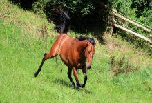 چرا اسب من می لغزد؟ | دام و پت