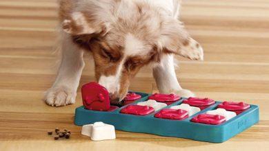 تمرینات ذهنی مناسب برای سگ ها | دام و پت