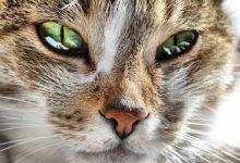 شایع ترین علائم افسردگی گربه ها | پزشکت