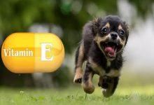 ویتامین E برای سگ: مزایا و موارد استفاده   دام و پت